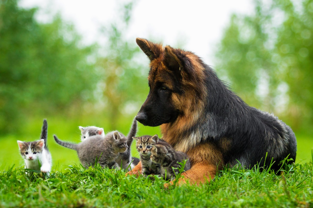 Puppy and kitten care - Mohnacky