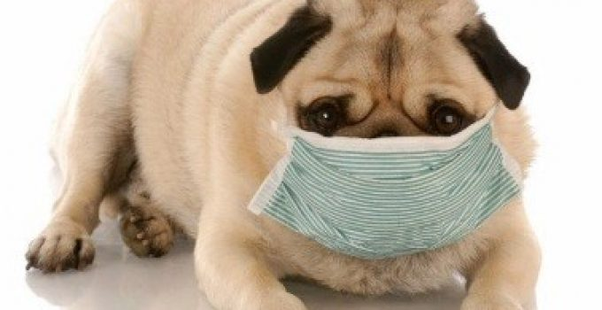 7 Ways to Keep Your Dog Happy During the Quarantine
